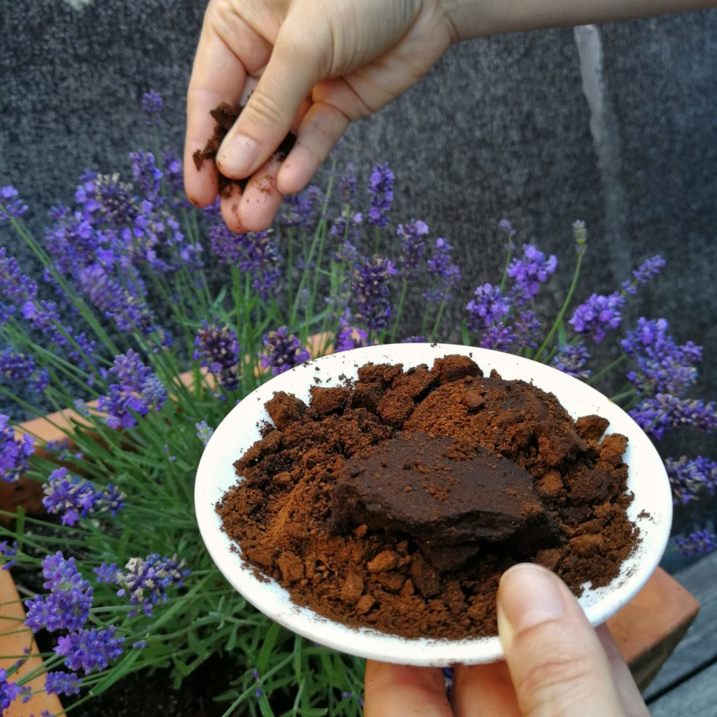 Kaffeesatz zum Düngen von Blumen